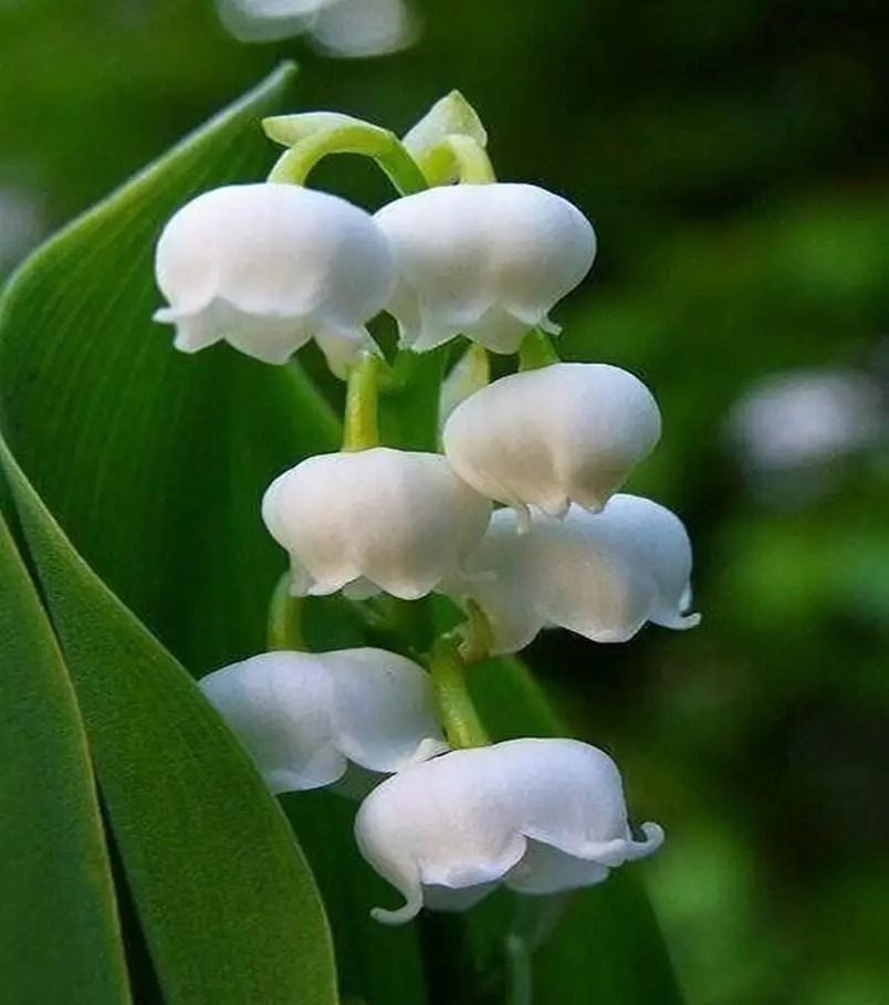 Fragrant flower 4