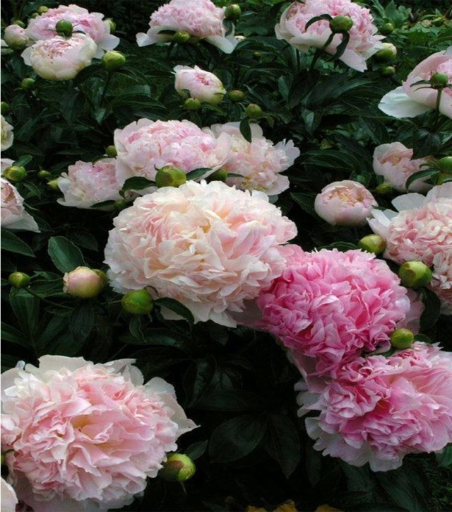 Fragrant flower 6