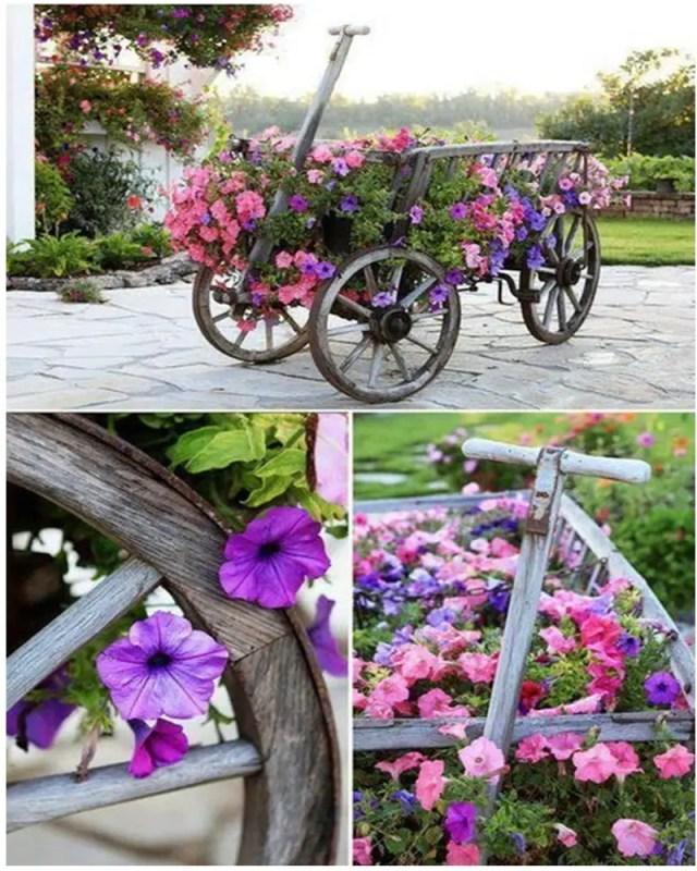 Petunia garden 13