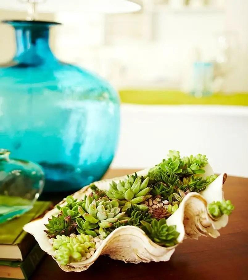 Succulents garden ideas 6