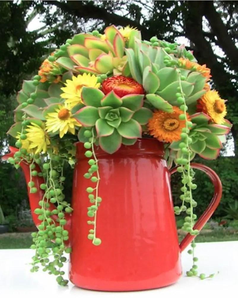 Succulents garden ideas 7
