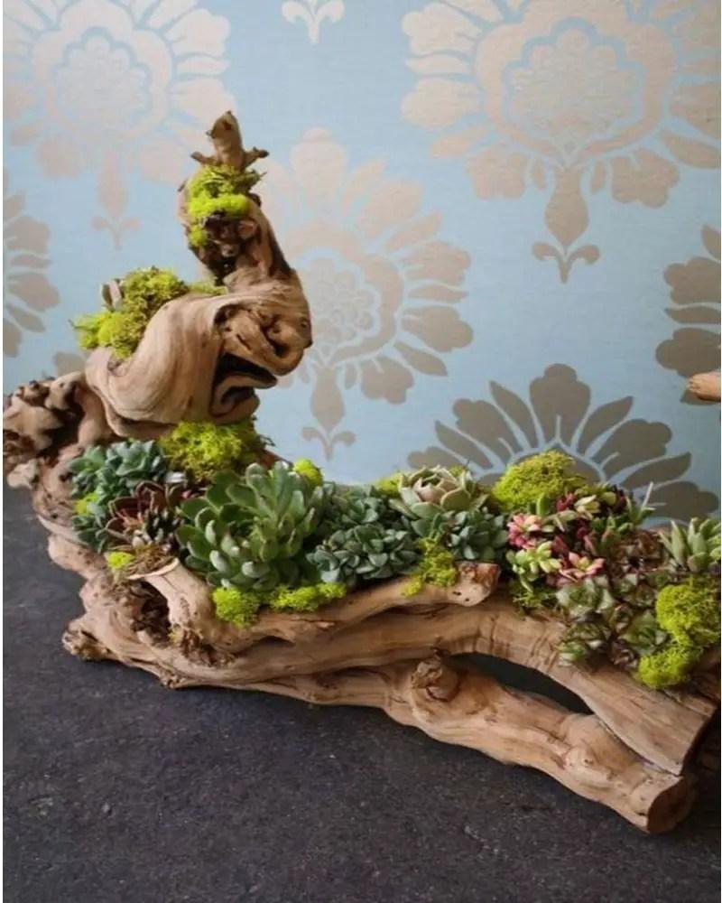 Succulents garden ideas 8
