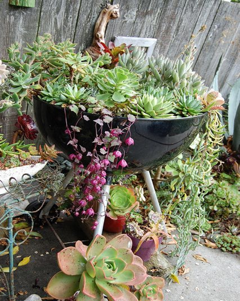 Succulents garden ideas 9