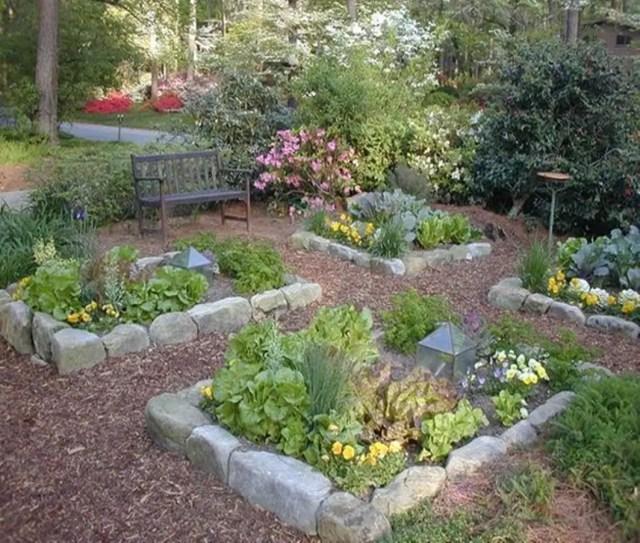 Vegetable garden 3