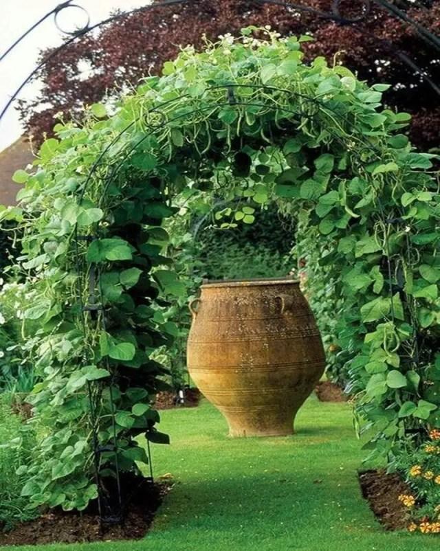 Vegetable garden 5