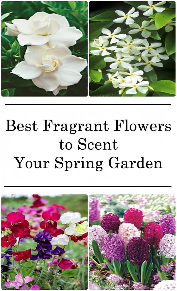 10 best fragrant flowers to scent your spring garden matchness flowers can add color and life but many of them also add intoxicating fragrance theres nothing like walking outside and smelling the sweet smell of mightylinksfo