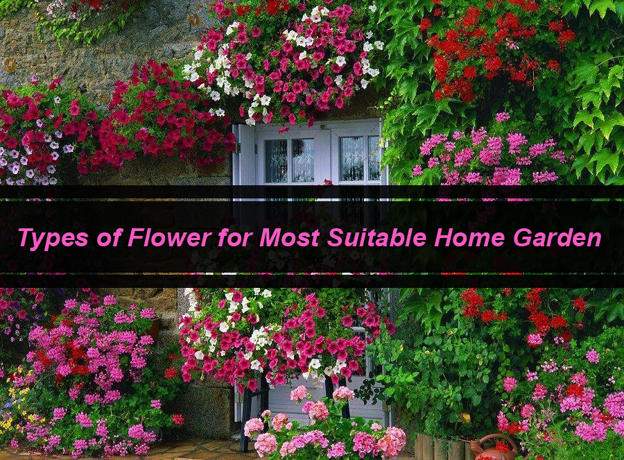 Types of Flower for Most Suitable Home Garden
