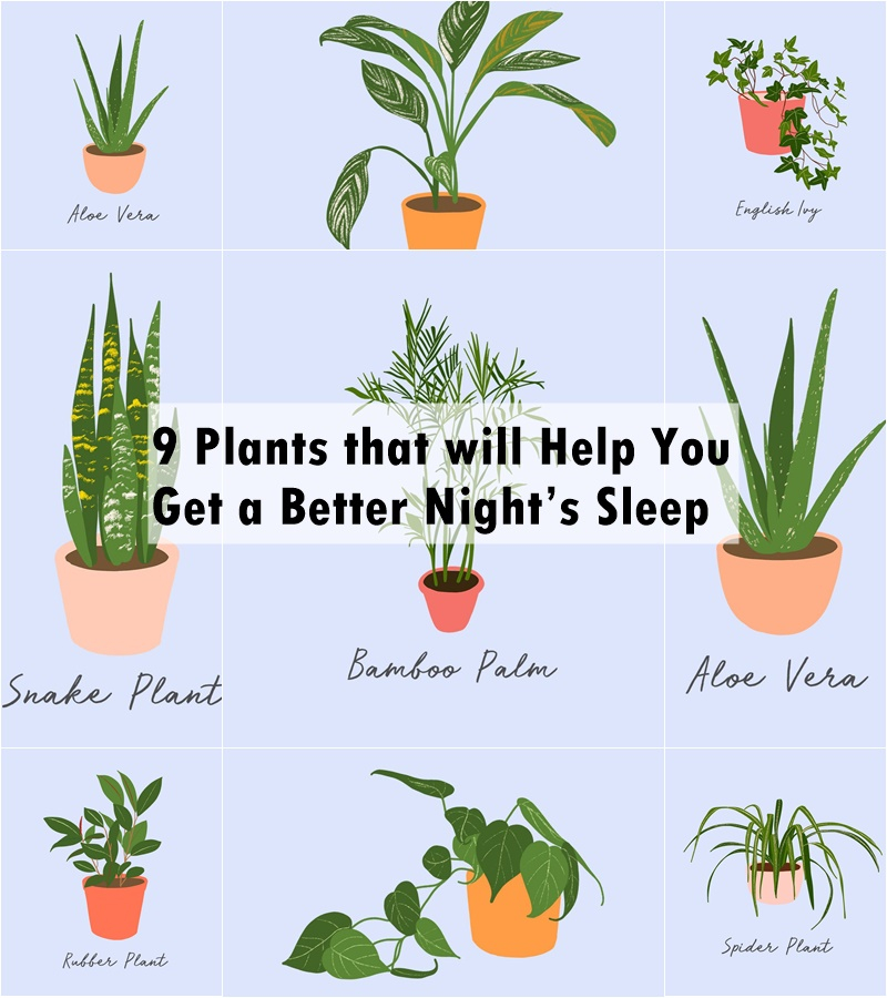 9 plants that will help you get a better night's sleep