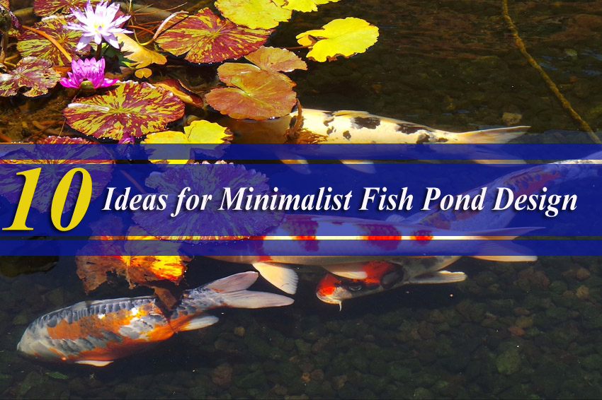 10 Ideas for Minimalist Fish Pond Design