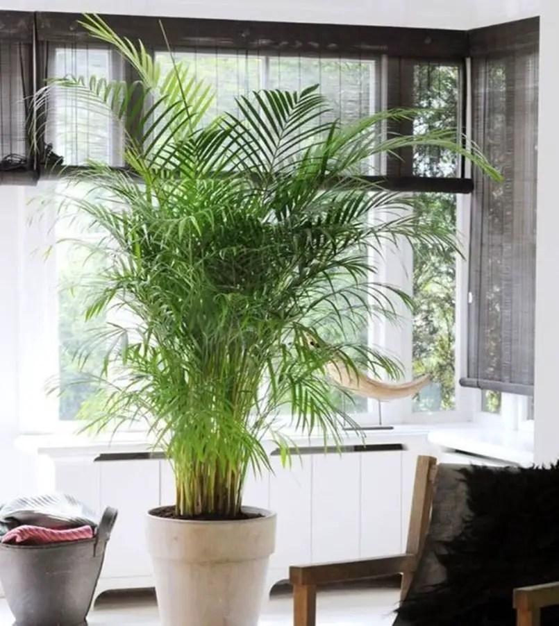Bedroom plants 7