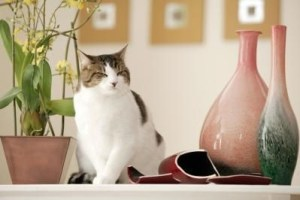 Awesome houseplants that are safe for animals 02