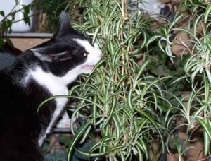 Awesome houseplants that are safe for animals 11