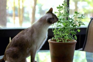 Awesome houseplants that are safe for animals 15