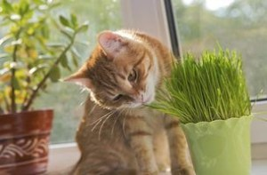 Awesome houseplants that are safe for animals 17