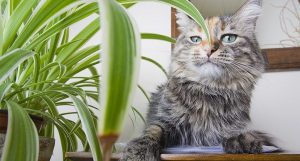 Awesome houseplants that are safe for animals 18