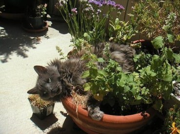 Awesome houseplants that are safe for animals 21
