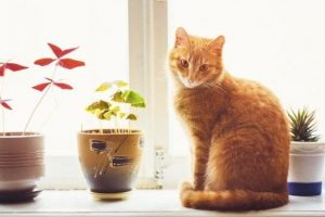 Awesome houseplants that are safe for animals 22