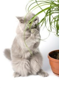 Awesome houseplants that are safe for animals 29
