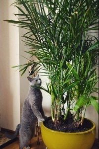 Awesome houseplants that are safe for animals 36