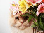 Awesome houseplants that are safe for animals 42