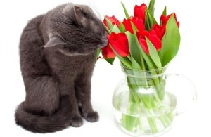 Awesome houseplants that are safe for animals 46