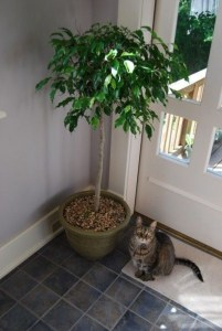 Awesome houseplants that are safe for animals 49