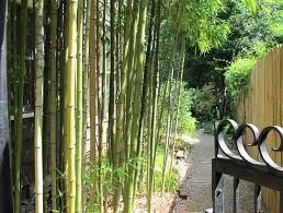 Bamboo fence ideas for small houses 03