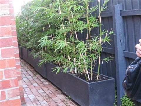 Bamboo fence ideas for small houses 28