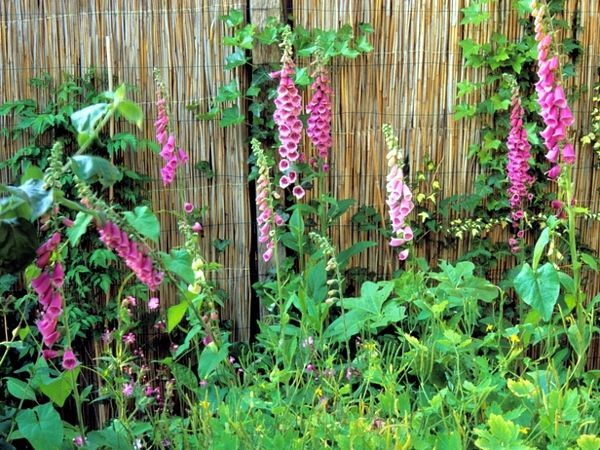 Bamboo fence ideas for small houses 41