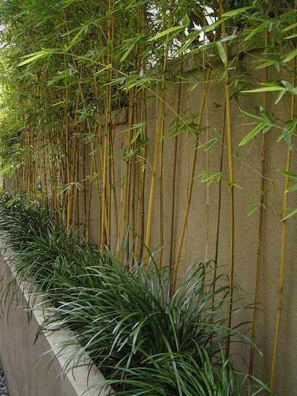 Bamboo fence ideas for small houses 43