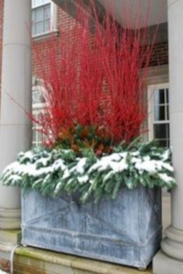 Colorful winter planters for your outdoor decorations 09