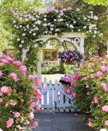 Amazing rose garden ideas in this year 02