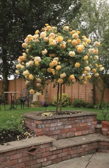 Amazing rose garden ideas in this year 09