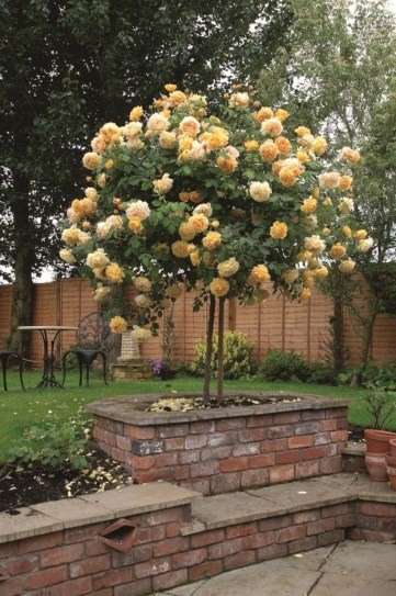 Amazing rose garden ideas in this year 09