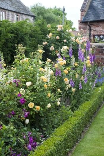 Amazing rose garden ideas in this year 10