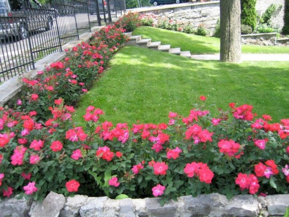 47 Amazing Rose Garden Ideas on This Year ~ Matchness.com