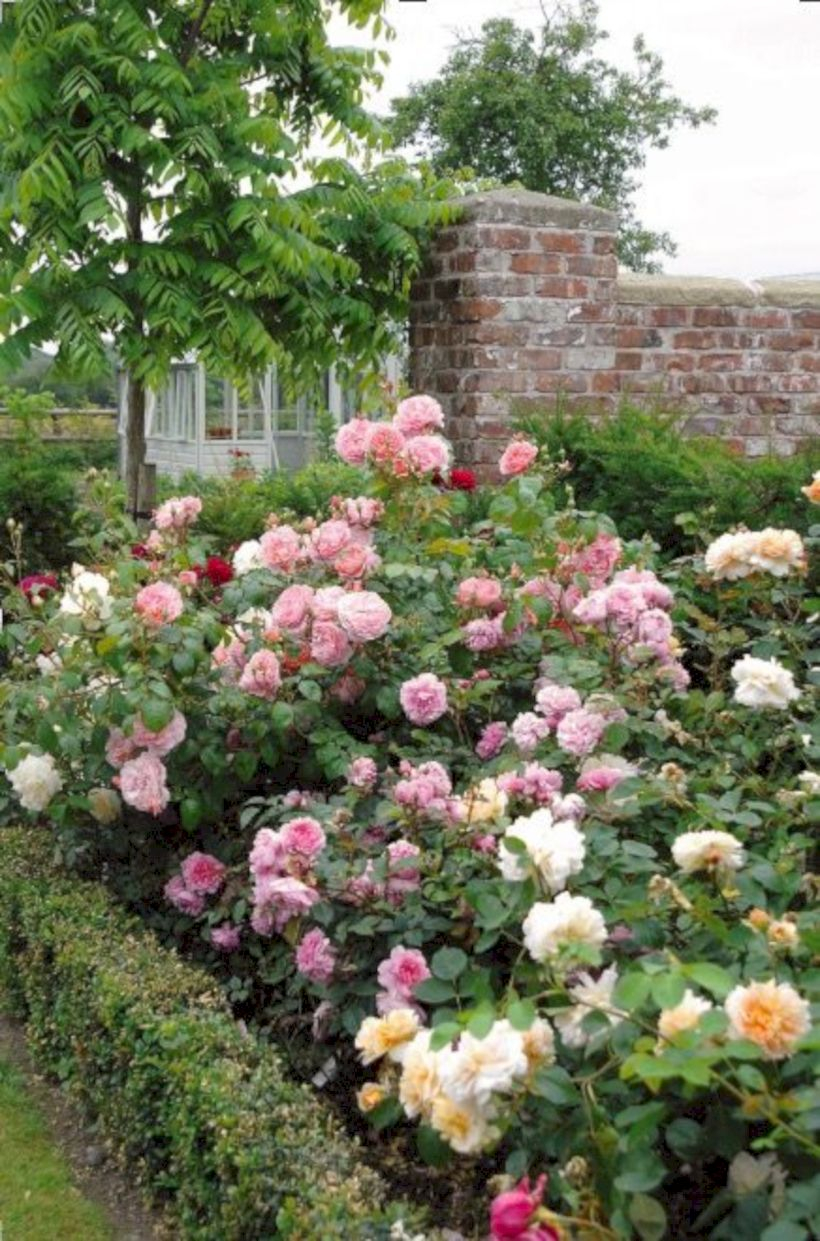 Amazing rose garden ideas in this year 33