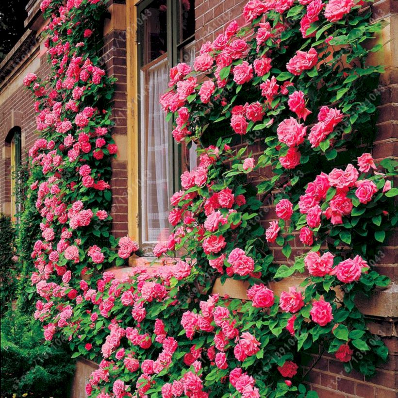 Amazing rose garden ideas in this year 35