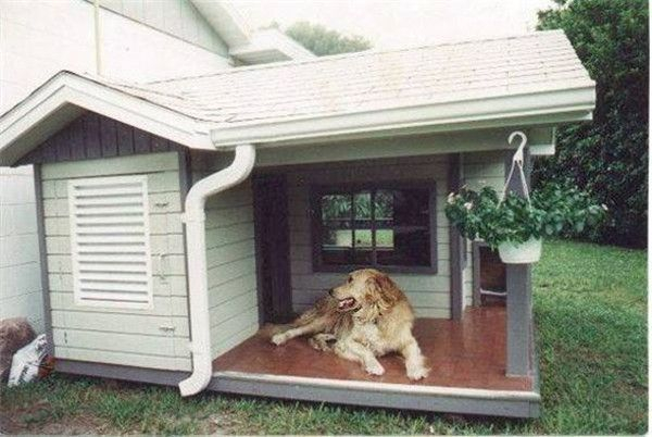 Home design ideas for your pet at home 06