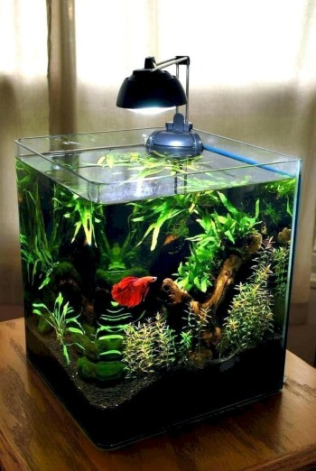 Aquarium design ideas that make your home look beauty 13