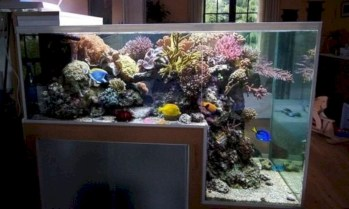 Aquarium design ideas that make your home look beauty 33