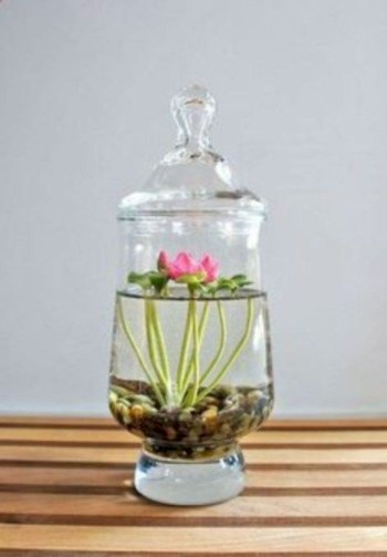 Indoor water garden ideas that fresh your room 12