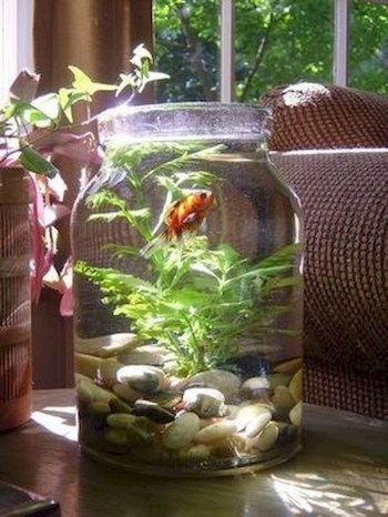 Indoor water garden ideas that fresh your room 19