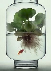 Indoor water garden ideas that fresh your room 23