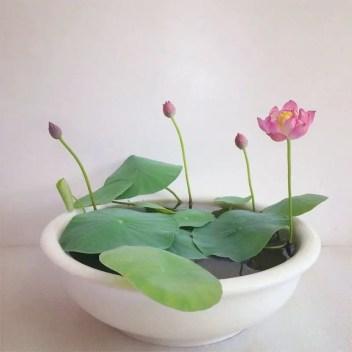 Indoor water garden ideas that fresh your room 34