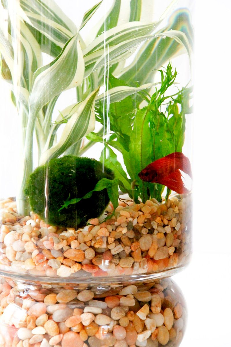 Indoor water garden ideas that fresh your room 45