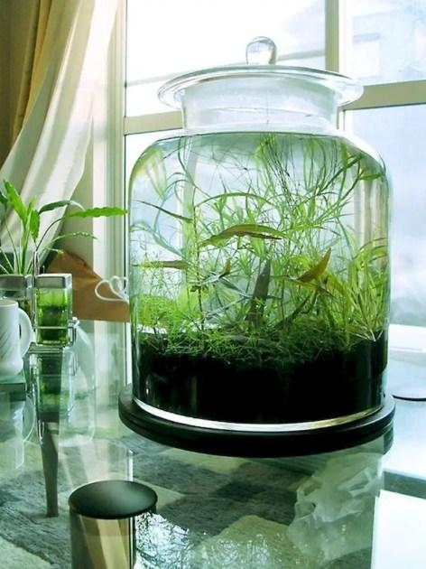 Indoor water garden ideas that fresh your room 47
