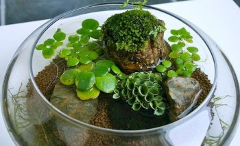 Indoor water garden ideas that fresh your room 50