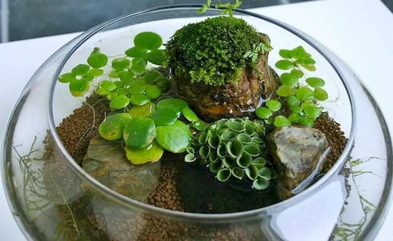 Indoor water garden ideas that fresh your room 50