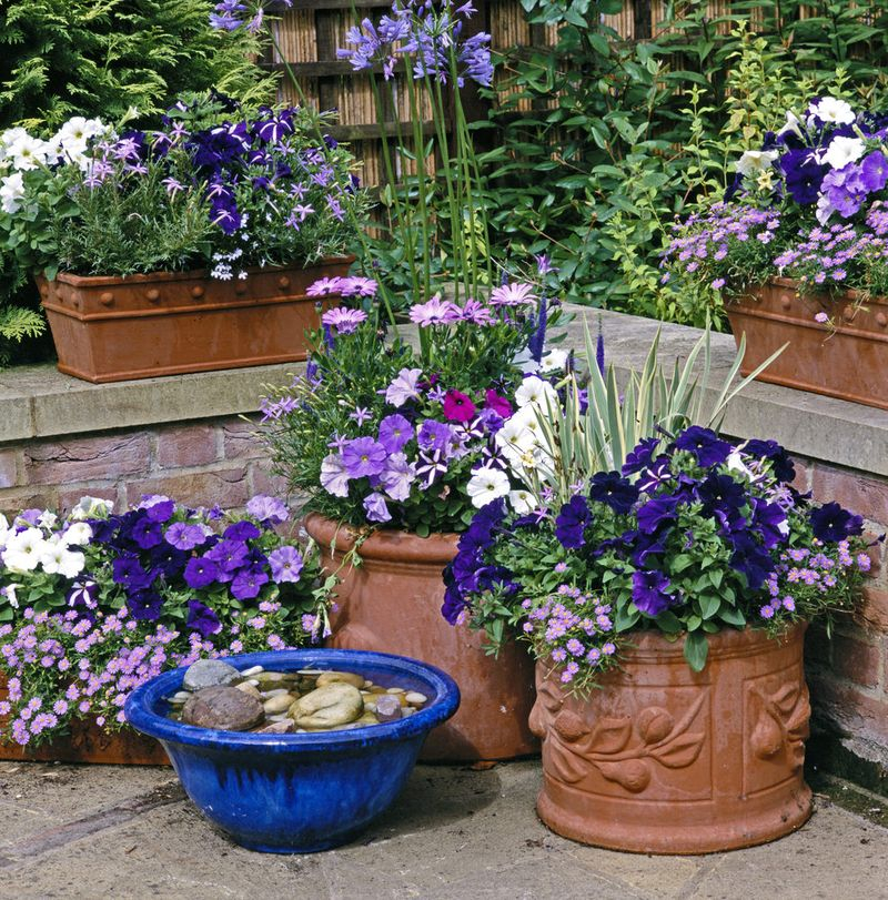 Simple container garden with dark blue flower to inspire your backyard plants in summer